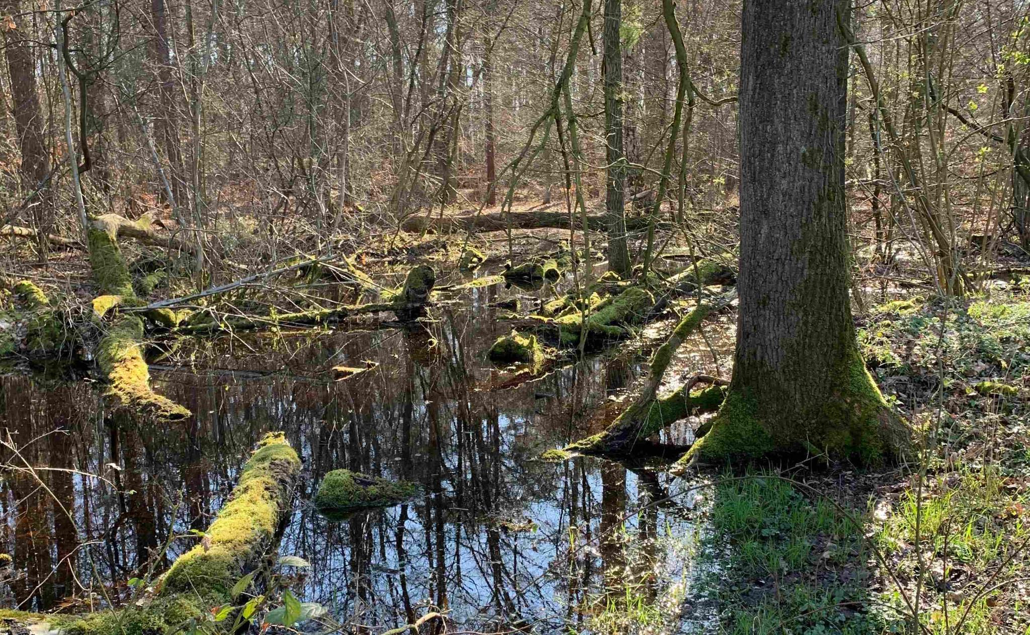 Waldtümpel Foto: Hubertus v. Dressler